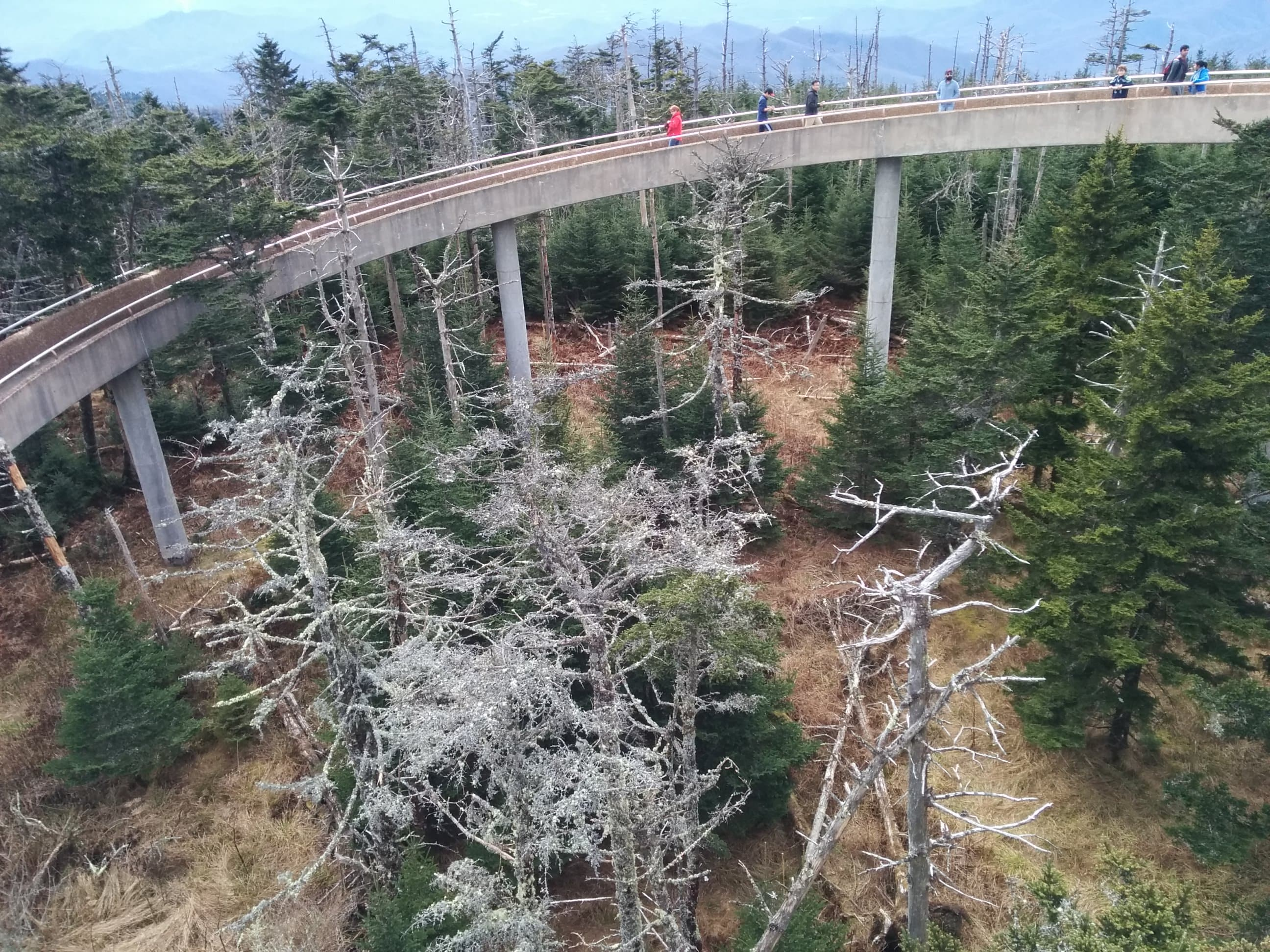 Bridge of Clingmans Dome