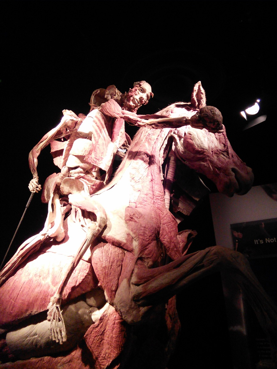 body_worlds_exhibition