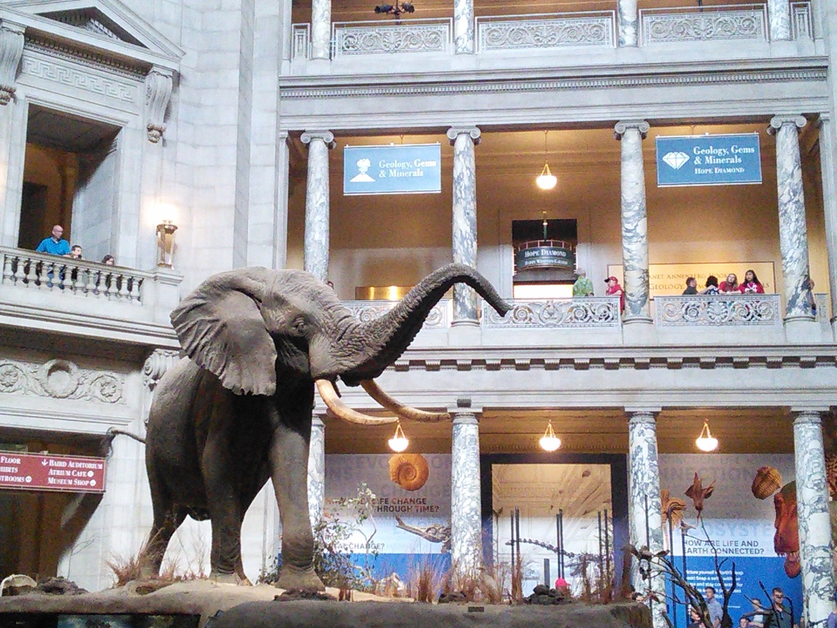 museum_of_natural_history_1