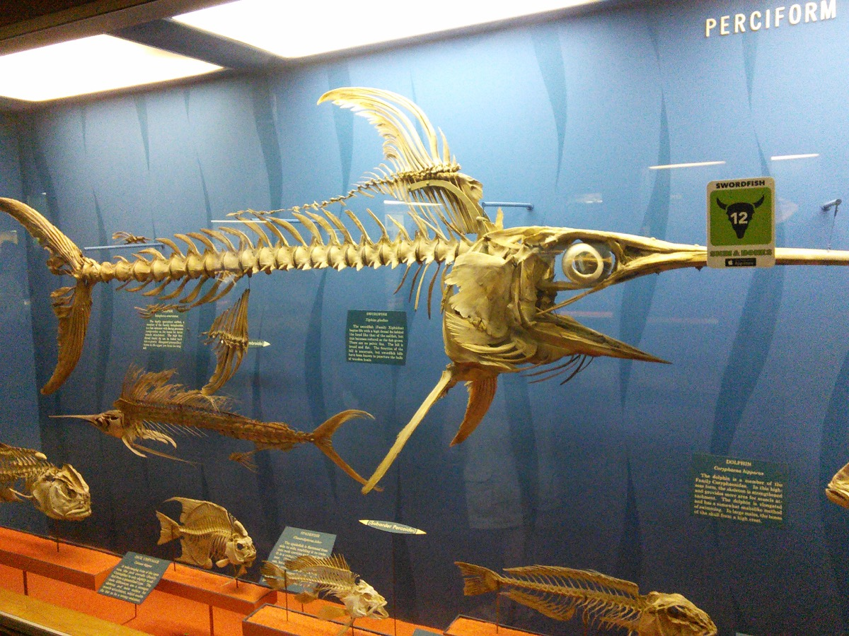 museum_of_natural_history_5