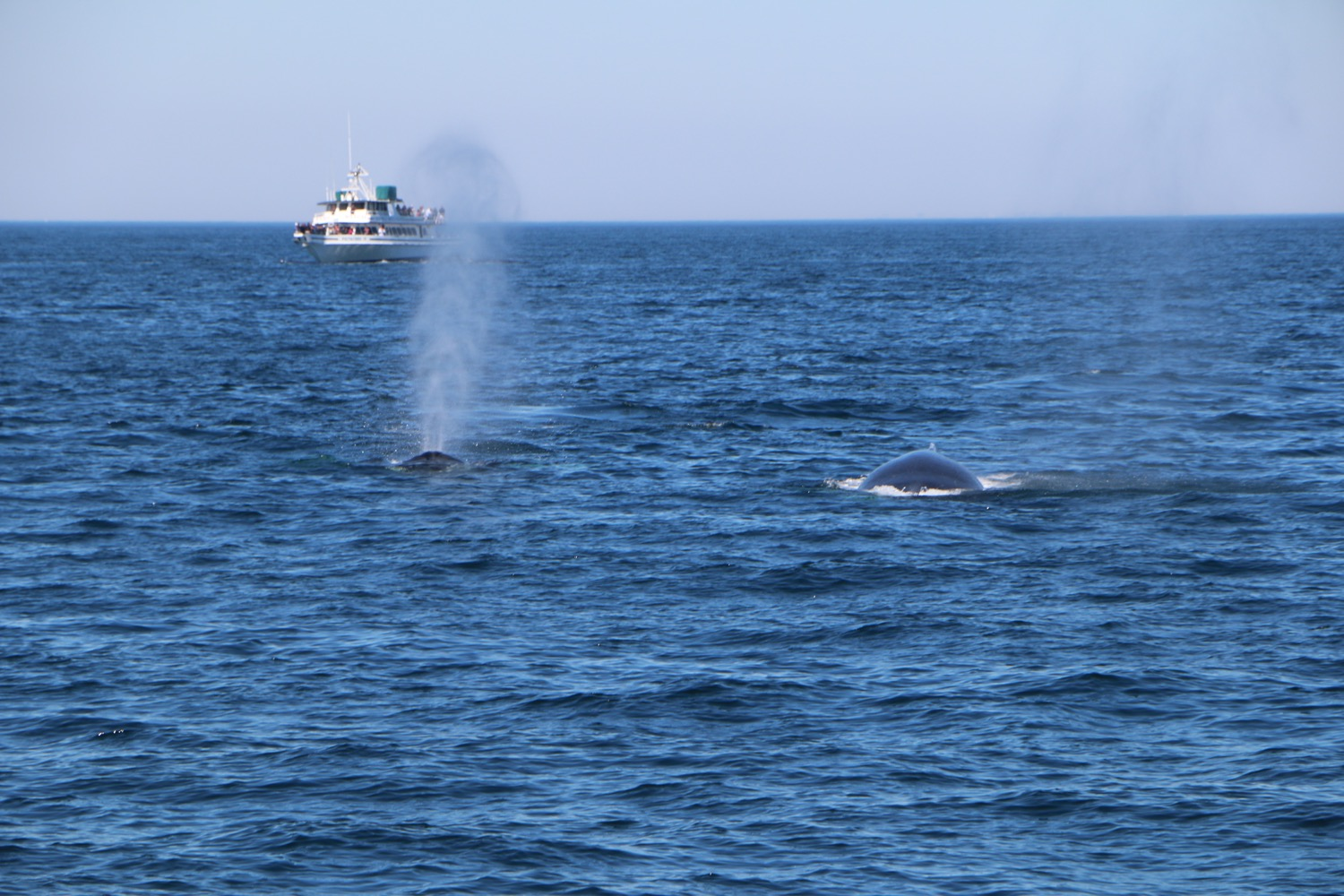 whale_watching_1