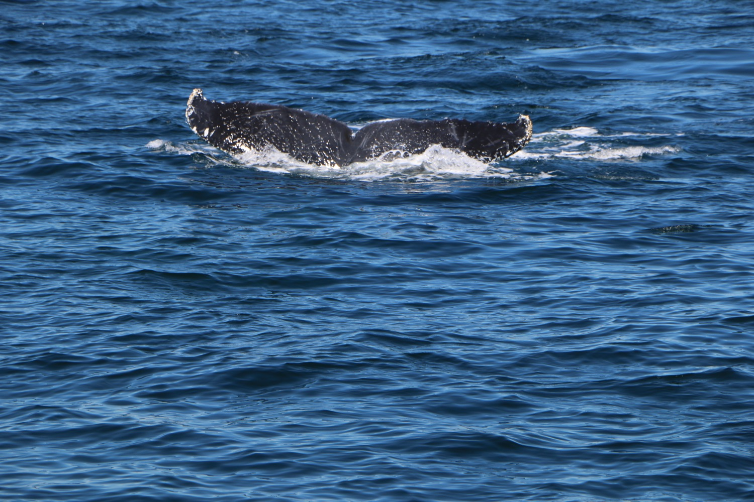 whale_watching_5