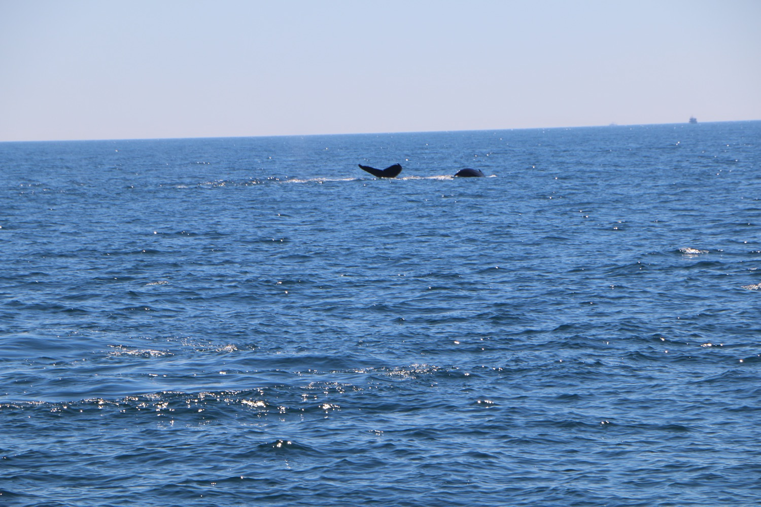whale_watching_6
