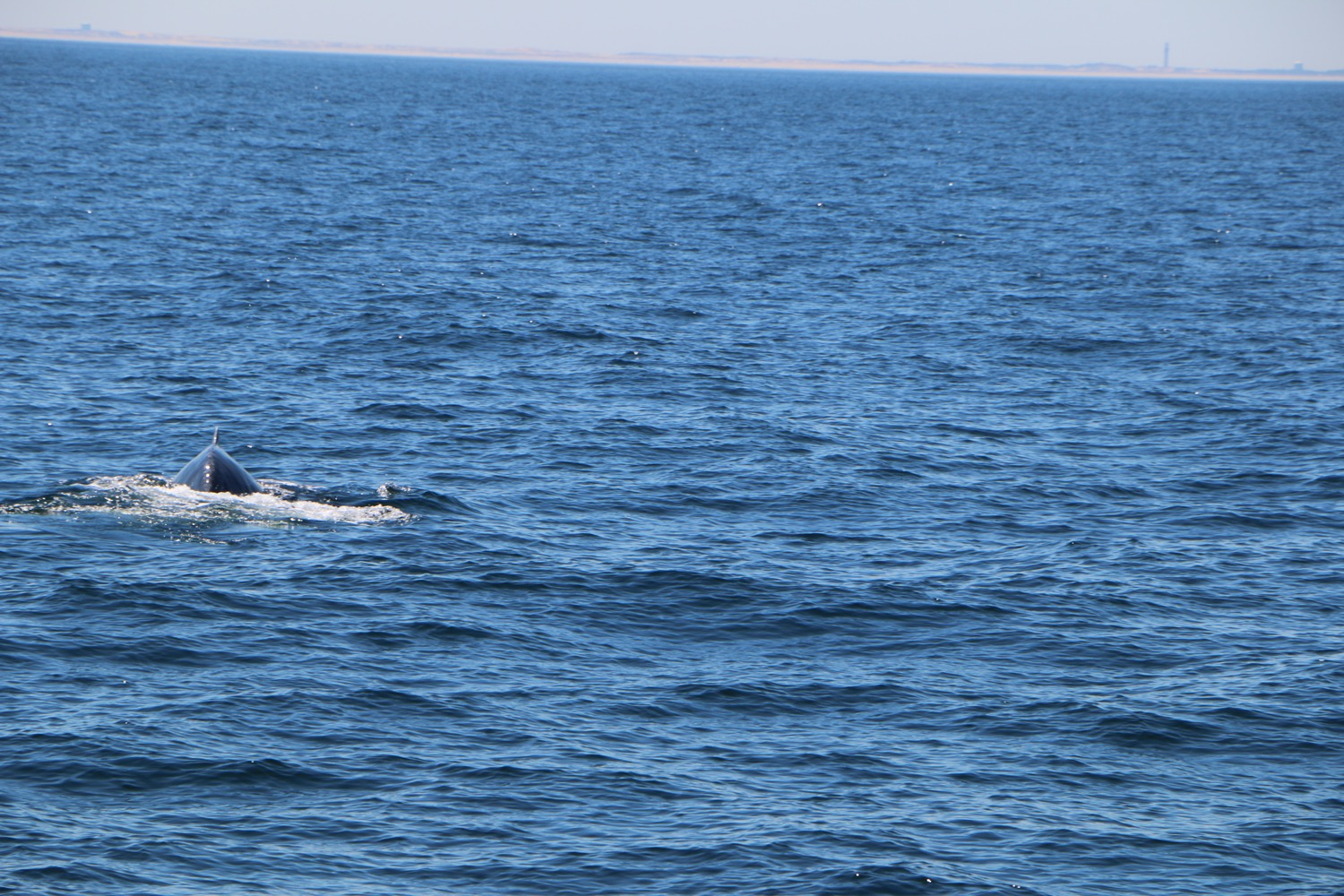 whale_watching_7